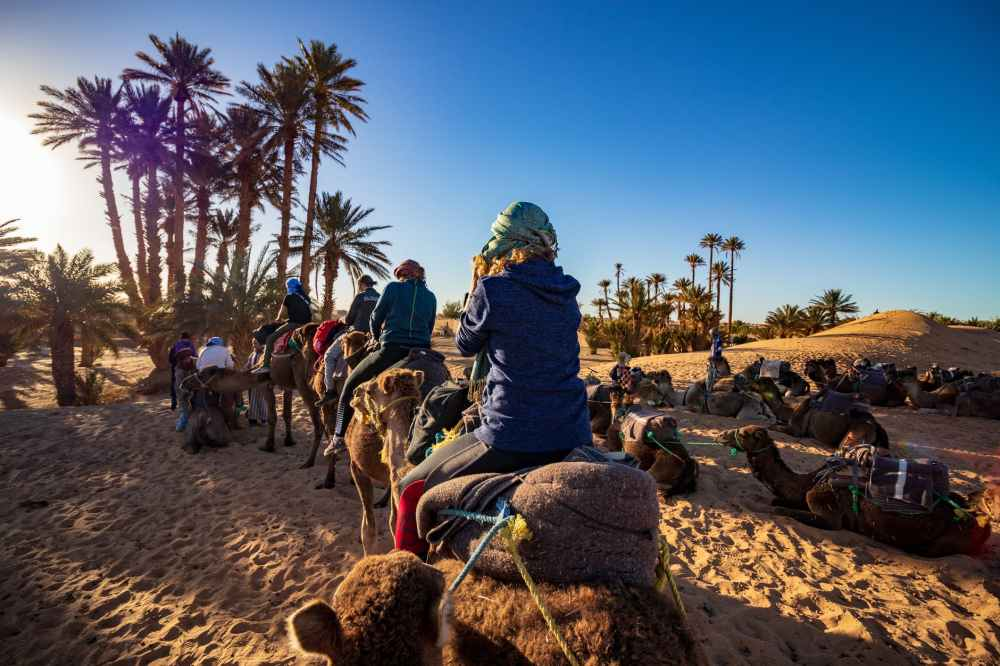 people riding camels